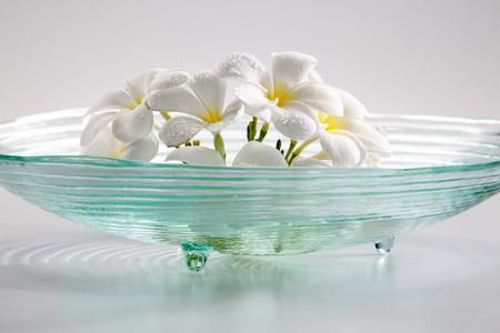 studio shot of the plumeria flower