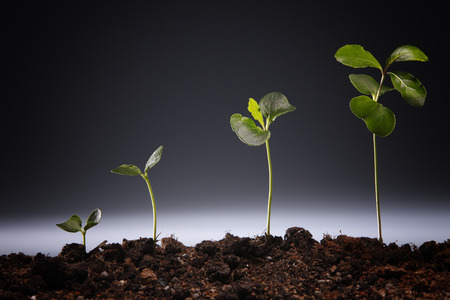 studio shot of the plant growing Imagens