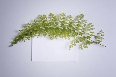 blank note and fern leat at the side
