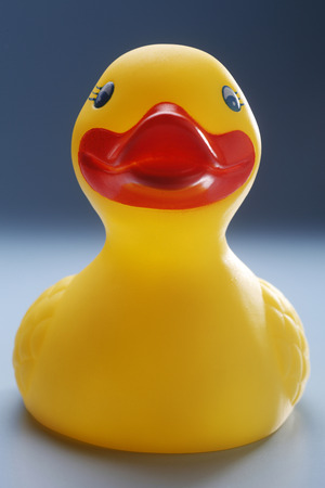 Rubber yellow duck isolated on coloured background. Фото со стока