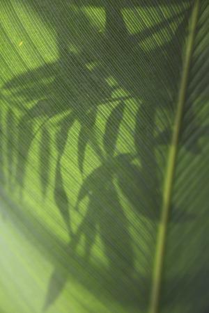 close up of green leaf veins