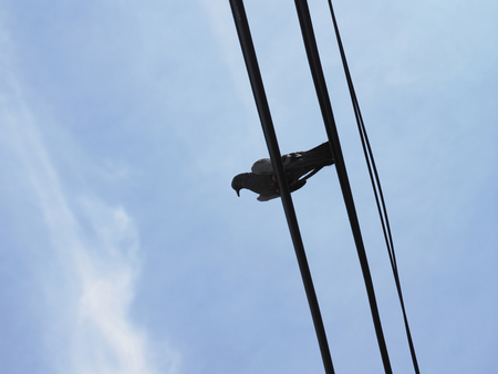 a bird on cable line