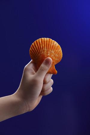 Human hand holding a seashell. Stock fotó