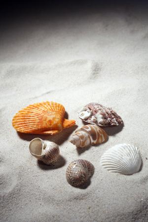 Seashells isolated on the sand.