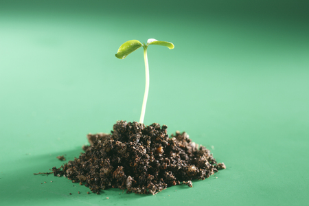 stock image of the small plant growing