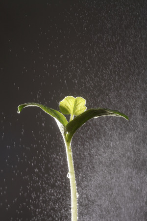 water splash into a plant