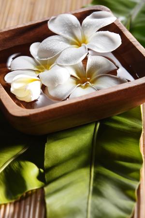 Studio shot of white plumeria on bamboo background Banco de Imagens
