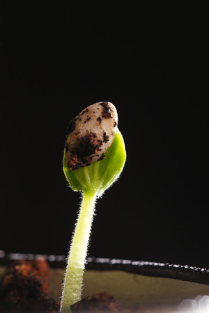 A new life growth on dirt Stock Photo