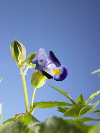 plant with flower with blue background
