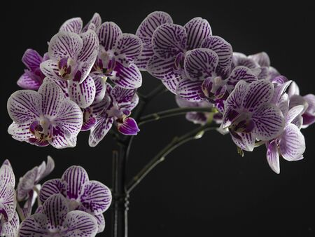 close up of the orchid flower on the dark background Stock fotó