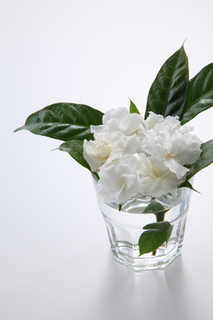 top view of the jasmine flower in the glass