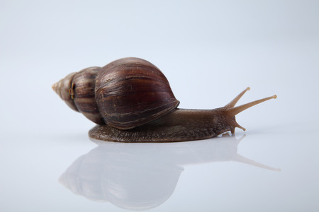 Snail isolated on white background Imagens