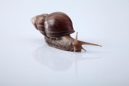 Snail isolated on white background 免版税图像