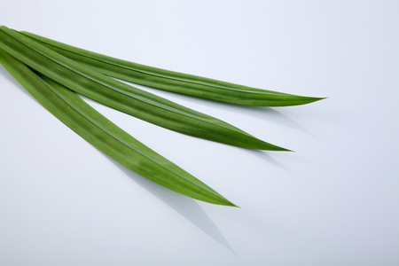Pandanus leaves, isolated on white background Stock Photo