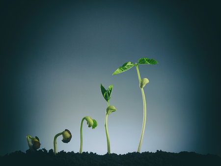 Growing plant in sequence isolated on gray background. Banco de Imagens