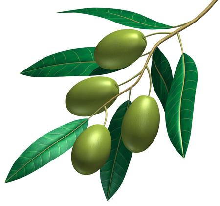 3d render of the olive fruit and leaf