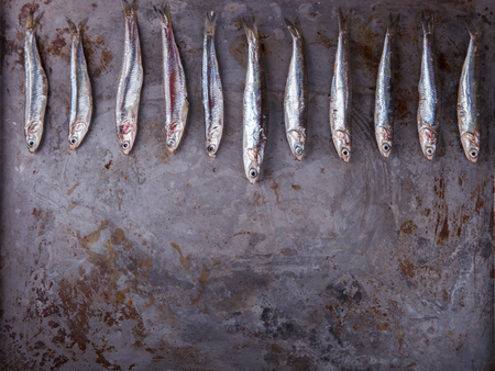 Anchovy Fresh Marine Fish.Copy space.Appetizer. selective focus.