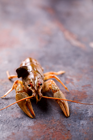 Crayfish Raw,Baby lobster.Background Seafood.Diet Nutrition Concept. Copy space for Text.