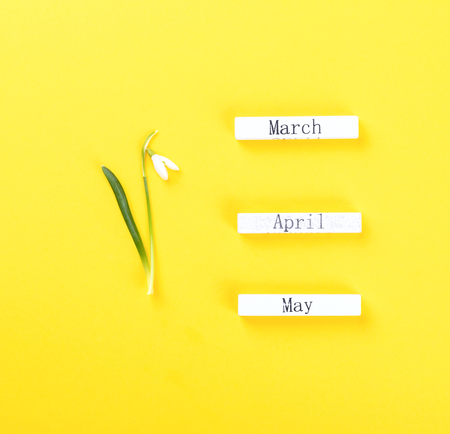 Wooden calendar spring months March April May. Flower is a symbol of spring snowdrop on a bright yellow background. Concept end of the cold Flat Lay Greeting card Stok Fotoğraf