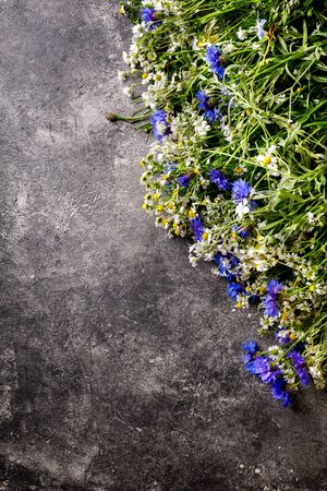 Wildflowers on a gray background. A festive and romantic bouquet of chamomile, cornflower of season paint.