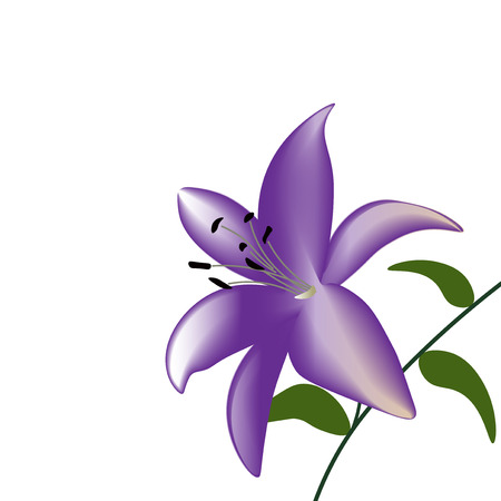 blown: Purple lily flower on a white background vector illustration