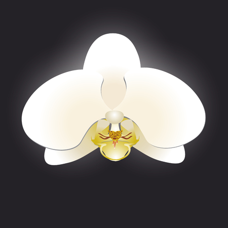 orchid isolated: White orchid isolated on a black background vector illustration Illustration