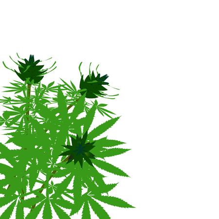 pot leaf: green bush of hemp vector illustration solated. Illustration