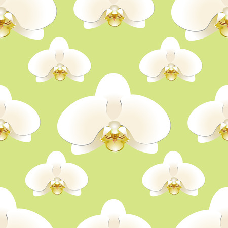 White orchid flowers on a background of pistachio-colored seamless pattern. Vector illustration Illustration