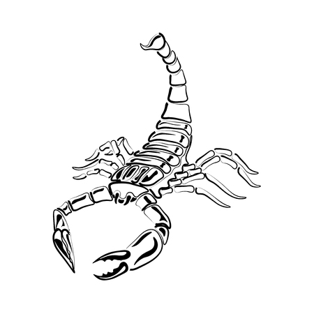 Black and white Scorpion for tattoos, zodiac sign, vector illustration