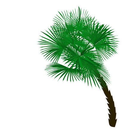 Green palm tree at an angle isolated on white background. Vector illustration