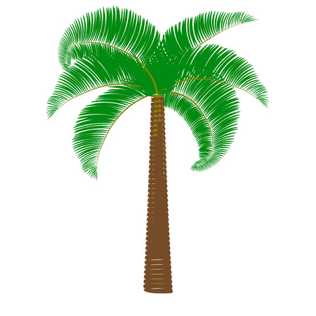 Green palm on a white background. Vector illustration Illustration