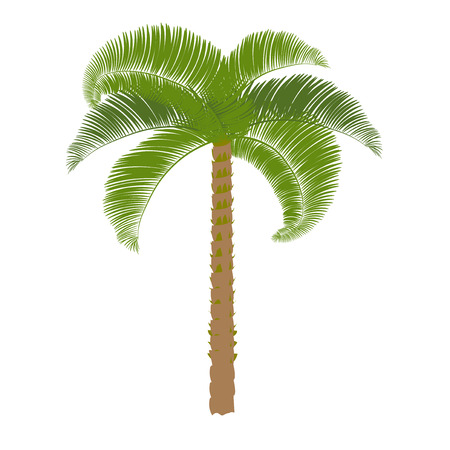 perform: Green palm on a white background to perform. Vector illustration.