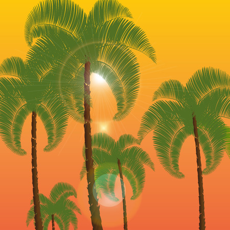Palm in two rows, a bottom view. Against the background of orange sunset, sunrise. Vector illustration
