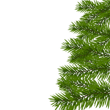 lush: Green lush spruce branch. Fir branches. Isolated on white vector illustration