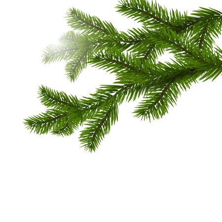 spruce: Two green spruce branches realistic. Christmas Spruce branches. Isolated on white Christmas vector illustration