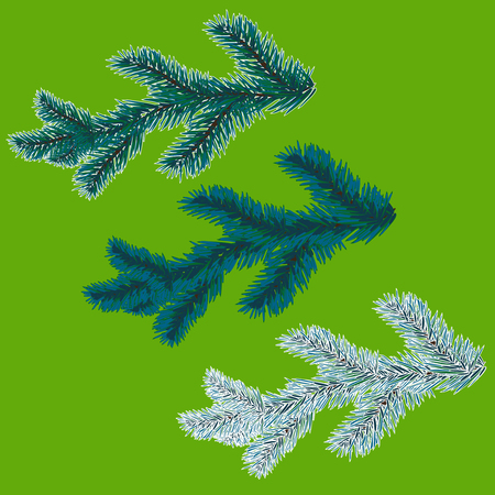 A set of blue spruce branches. Christmas tree - a symbol. The branches of spruce in frost. illustration Illustration