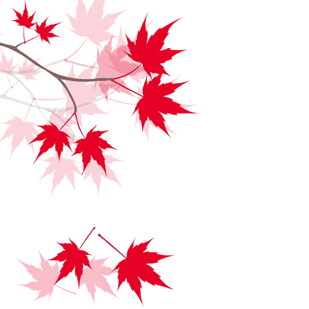 japanese maple: Red maple leaves on the branches. Japanese red maple. Vector illustration