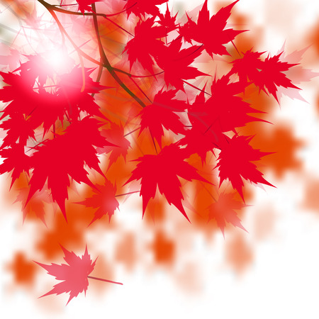 japanese maple: Red maple leaves on the branches. Japanese red maple. Against the background of autumn leaves. Vector illustration