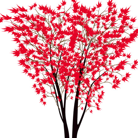 japanese maple: Card with autumn maple tree. Red maple trees in the middle. Japanese red maple. Vector illustration