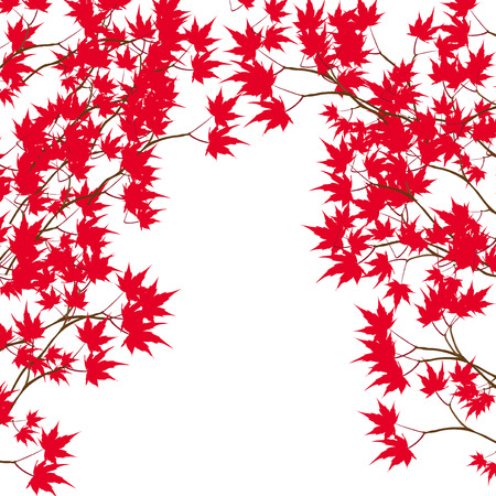 either: Greeting card. Red maple leaves on the branches on either side. Japanese red maple on a white background. Vector illustration Illustration