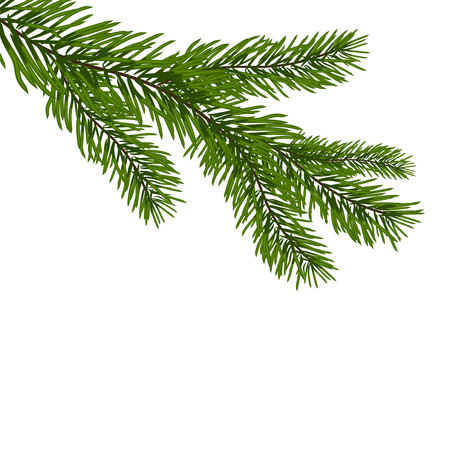Green, realistic branch of fir. Fir branches. Isolated on white. Christmas  illustration