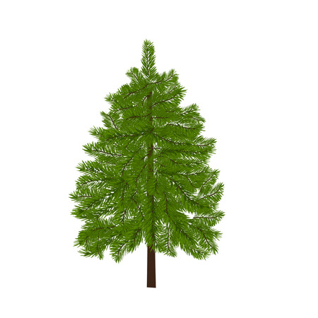 Green lush spruce. Fir branches. Isolated on white  illustration