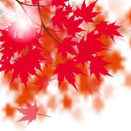 japanese maple: Red maple leaves on the branches. Japanese red maple. Against the background of autumn leaves.  illustration