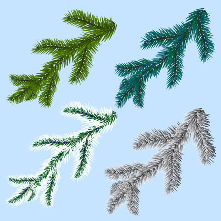 felicitation: Set of four spruce, pine branches, isolated on a blue background. Freezing day.  illustration Stock Photo