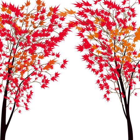 japanese maple: Card with autumn maple tree. Red maples. Japanese red maple.  illustration