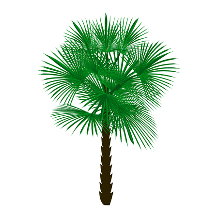 Green palm tree isolated on white background.  illustration