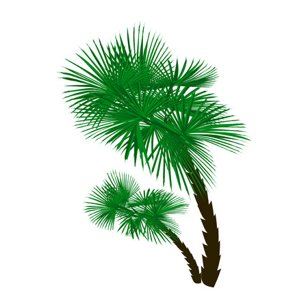Two green palm trees at an angle isolated on white background.  illustration