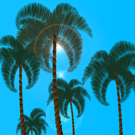 lush foliage: Palma in two rows in the bottom view. Against the backdrop of a blue, cloudless sky. Sun.  illustration Stock Photo