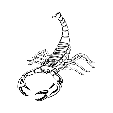 Aggressive black and white Scorpion for tattoos, zodiac sign. Made with a predominance of white.  illustration Stock Photo