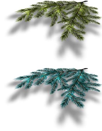 a sprig: Blue and green Christmas tree branches on an isolated white background with the shadow in perspective. Vector illustration